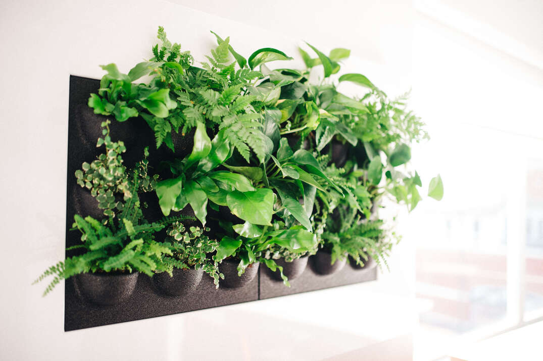 Office plants healthy air
